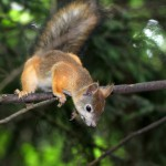 a-curious-squirrel (1)