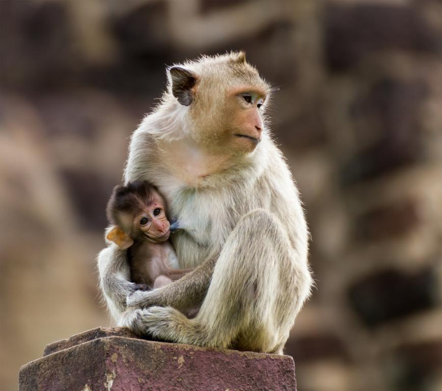 baby-monkey-and-mother