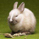 bunny-in-grass-springtime-colorful-bright-theme
