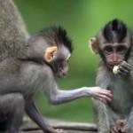 childs-of-monkeys