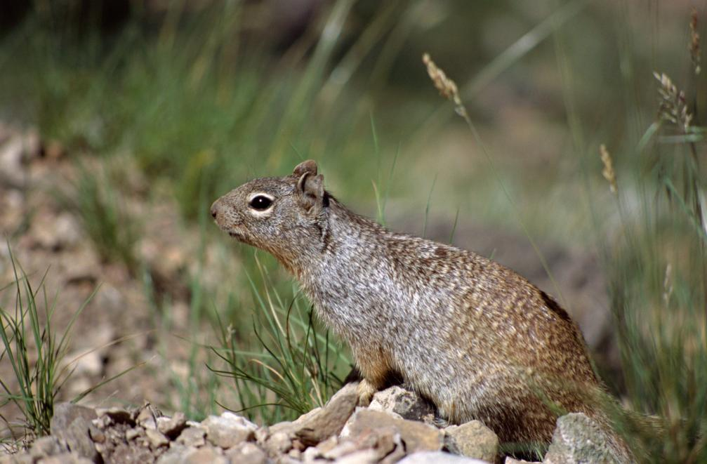 close-view-of-a-squirrel