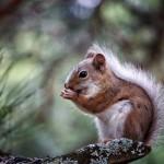 cute-squirrel-eating