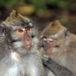 family-of-monkeys (1)