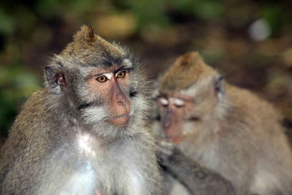 Tierpark Olderdissen Bielefeld: Affen, Bären, Elche, Rehe, Esel, Rinder, Bison, Rothirsch, Braunbär, Auerhahn, Pfau, Eulen, Wisent, Wildschweine, Hirschwild, Rotwild, Heimtiere, Wildtiere,  Öffnungszeiten, Anfahrt, Eintritt, Tiere, Restaurantfamily-of-monkeys (1)
