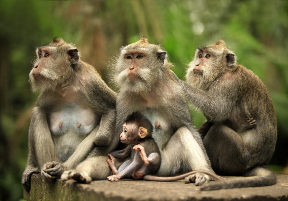 family-of-monkeys (2)