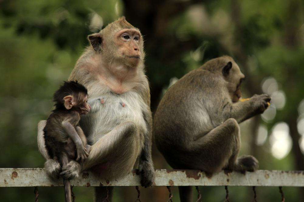 family-of-monkeys (3)