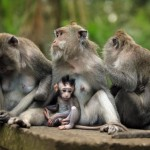 family-of-monkeys (4)