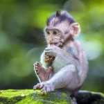 little-baby-monkey