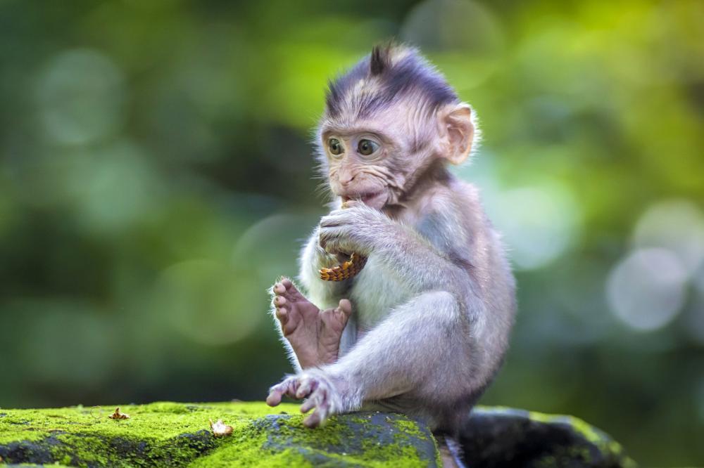Tierpark Olderdissen Bielefeld: Affen, Bären, Elche, Rehe, Esel, Rinder, Bison, Rothirsch, Braunbär, Auerhahn, Pfau, Eulen, Wisent, Wildschweine, Hirschwild, Rotwild, Heimtiere, Wildtiere,  Öffnungszeiten, Anfahrt, Eintritt, Tiere, Restaurantlittle-baby-monkey