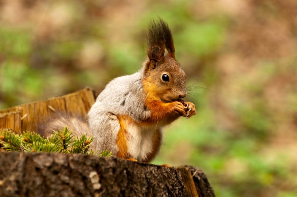 little-squirrel-eating-nut-in-park-at-spring (1)