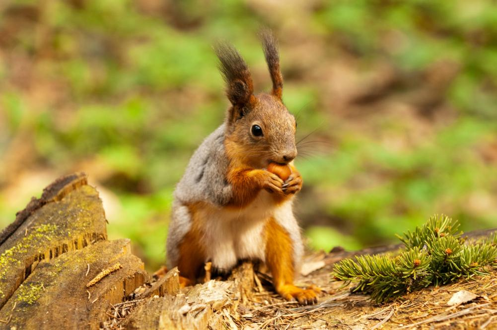 little-squirrel-eating-nut-in-park-at-spring