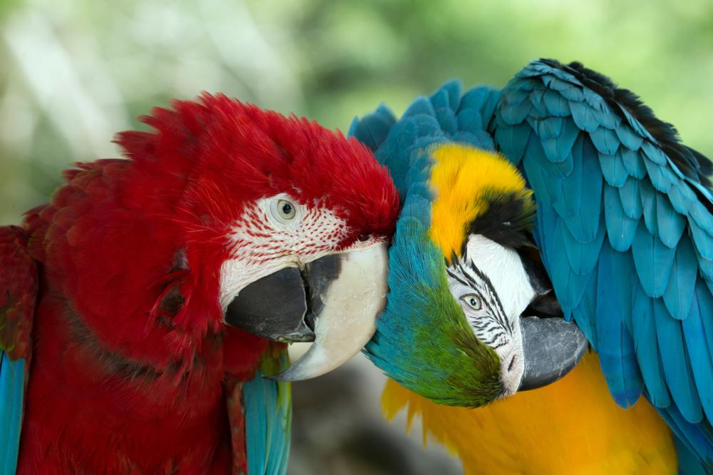 parrots (10)