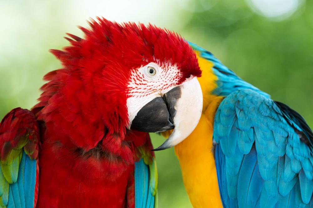 parrots (12)