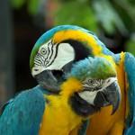 parrots (14)