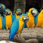 parrots (15)