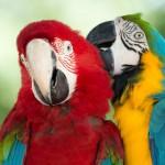 parrots (16)