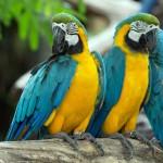 parrots (17)