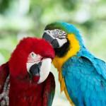 parrots (5)