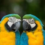 parrots (9)