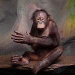 portrait-of-orangutan-pongo-pygmaeus