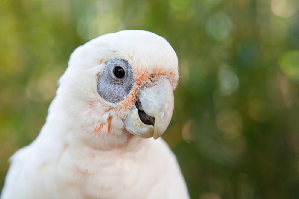 portriat-of-a-parrot
