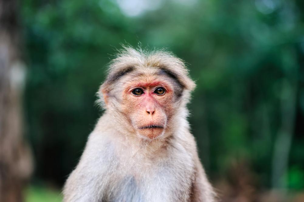 Tierpark Olderdissen Bielefeld: Affen, Bären, Elche, Rehe, Esel, Rinder, Bison, Rothirsch, Braunbär, Auerhahn, Pfau, Eulen, Wisent, Wildschweine, Hirschwild, Rotwild, Heimtiere, Wildtiere,  Öffnungszeiten, Anfahrt, Eintritt, Tiere, Restaurantrhesus-monkey