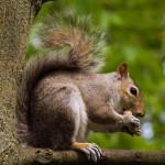 squirrel-eating (1)