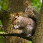 squirrel-eating