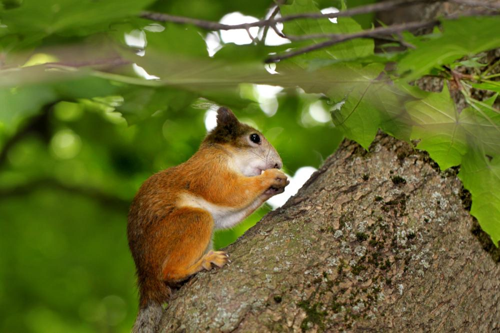 squirrel-eating-a-nut-on-a-tree