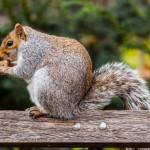 squirrel-in-park