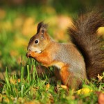 squirrel-in-the-autumn-forest
