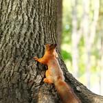 squirrel-in-the-autumn-forest (3)