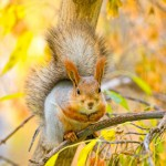 squirrel-on-the-branch