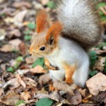 squirrel-standing-on-the-ground