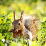 squirrel-with-pinecone