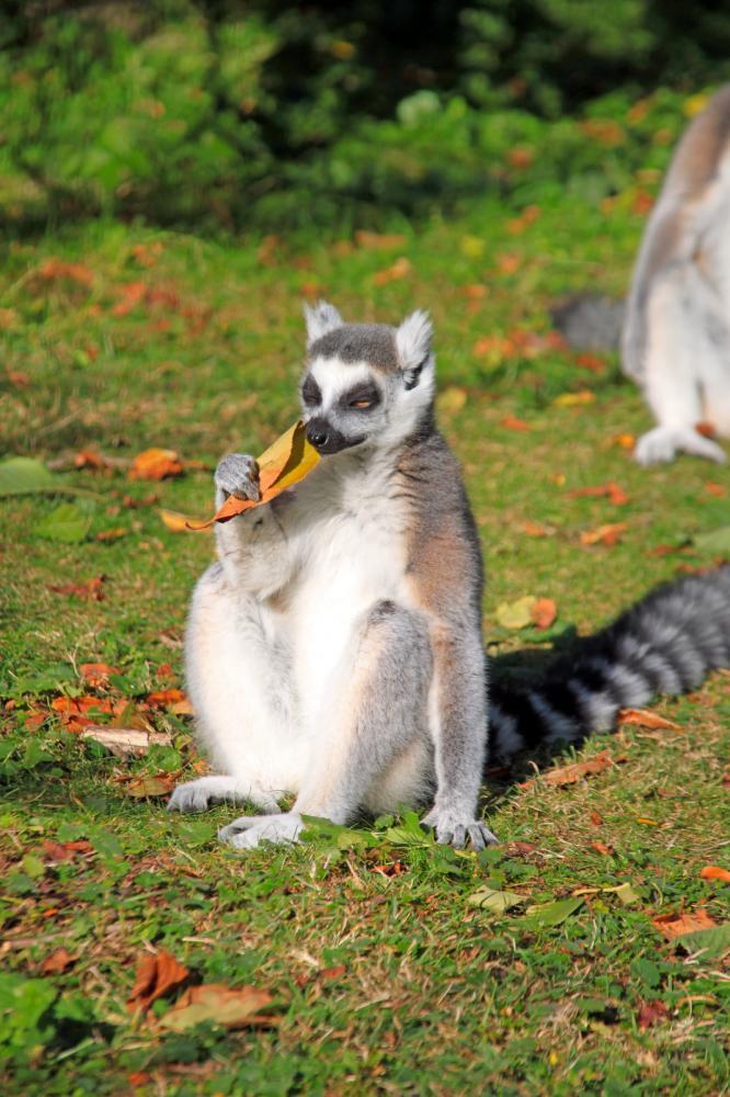 Tierpark Olderdissen Bielefeld: Affen, Bären, Elche, Rehe, Esel, Rinder, Bison, Wisent, Wildschweine, Hirschwild, Rotwild, Heimtiere, Wildtiere,  Öffnungszeiten, Anfahrt, Eintritt, Tiere, Restauranttasting-the-autumn