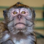 the-little-monkey