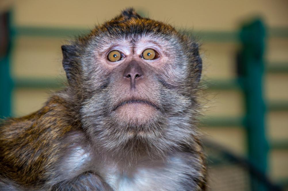 Tierpark Olderdissen Bielefeld: Affen, Bären, Elche, Rehe, Esel, Rinder, Bison, Rothirsch, Braunbär, Auerhahn, Pfau, Eulen, Wisent, Wildschweine, Hirschwild, Rotwild, Heimtiere, Wildtiere,  Öffnungszeiten, Anfahrt, Eintritt, Tiere, Restaurantthe-little-monkey