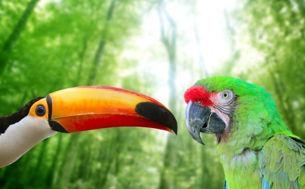 Tierpark Olderdissen Bielefeld: Affen, Bären, Elche, Rehe, Esel, Rinder, Bison, Rothirsch, Braunbär, Auerhahn, Pfau, Eulen, Wisent, Wildschweine, Hirschwild, Rotwild, Heimtiere, Wildtiere,  Öffnungszeiten, Anfahrt, Eintritt, Tiere, Restauranttoco-toucan-and-military-macaw-green-parrot