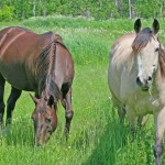two-horses-in-pasture