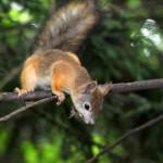 a-curious-squirrel (1)