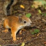 a-curious-squirrel