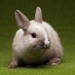 baby-bunny-springtime-colorful-bright-theme