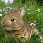 easter-rabbit