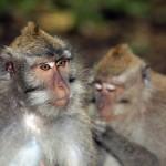 family-of-monkeys (1)