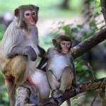 family-of-monkeys