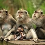 family-of-monkeys (2)