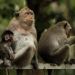 family-of-monkeys (3)