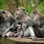 family-of-monkeys (4)