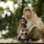 family-of-monkeys (5)